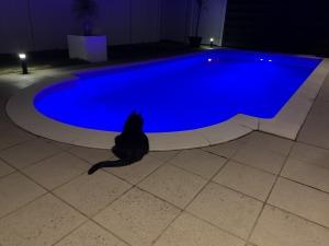 つくば市 家庭 プール