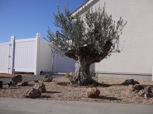 つくば市 外構 シンボルツリー